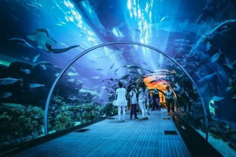 Dubai Aquarium & Underwater Zoo