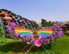 Butterfly Garden Dubai