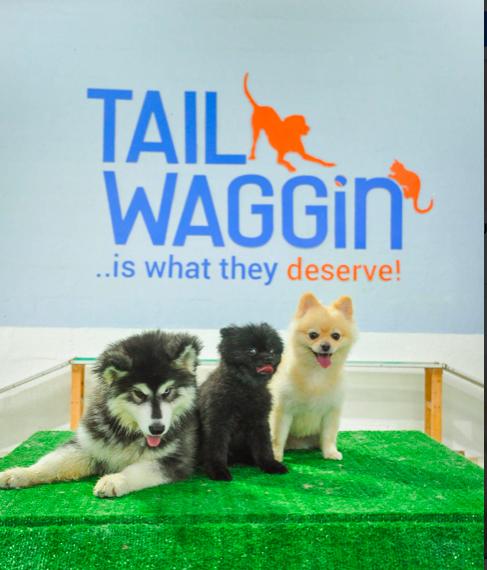 Tail-Waggin