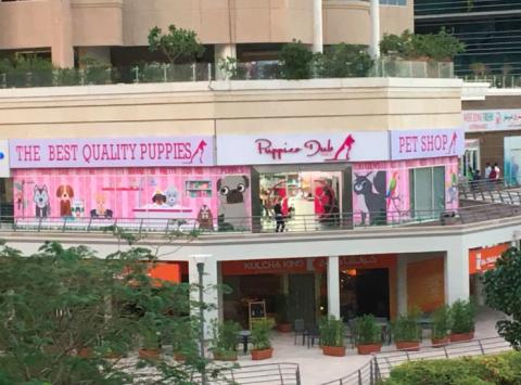 Puppies Dubai DMCC