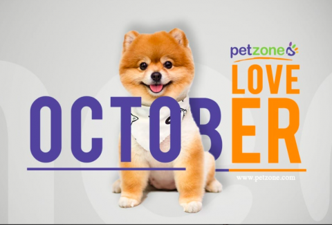 Petzone, Sheikh Zayed Road