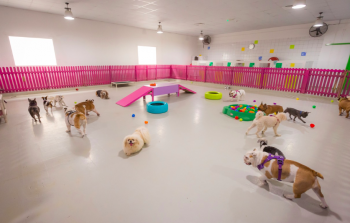 Dogwalk Daycare & Grooming
