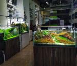 Green Desert Aquarium Trading