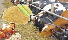 Al Waseem Livestock & Feed Trading