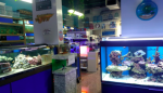 Arowana Aquarium & Pet