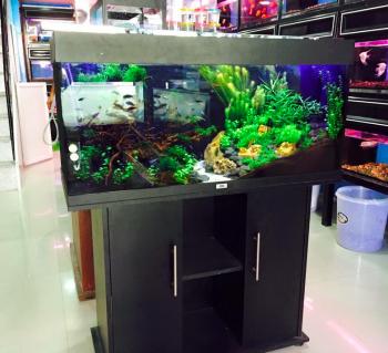 Dar Al Nama Ornamental Fish Trading