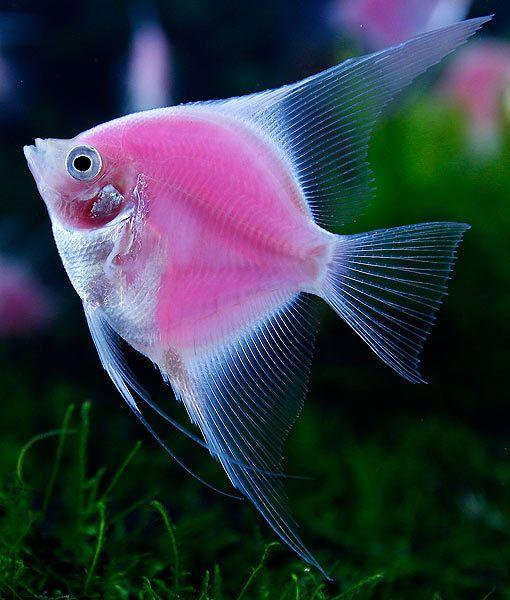 Al Sherias Ornamental Fish & Birds Trading